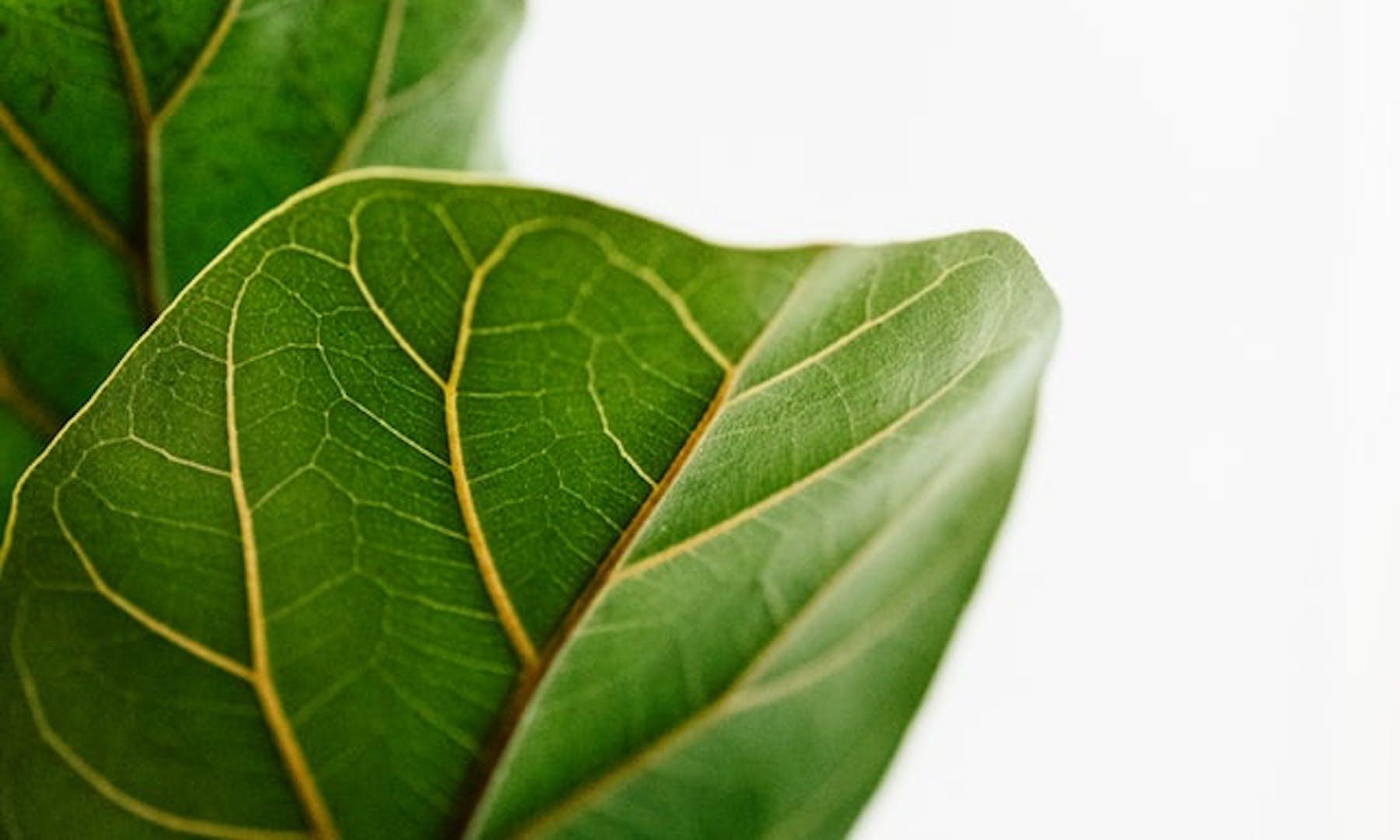 plants improve SBS