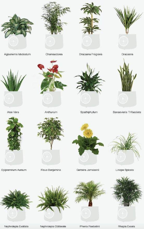piante purificatore d'aria naturale
