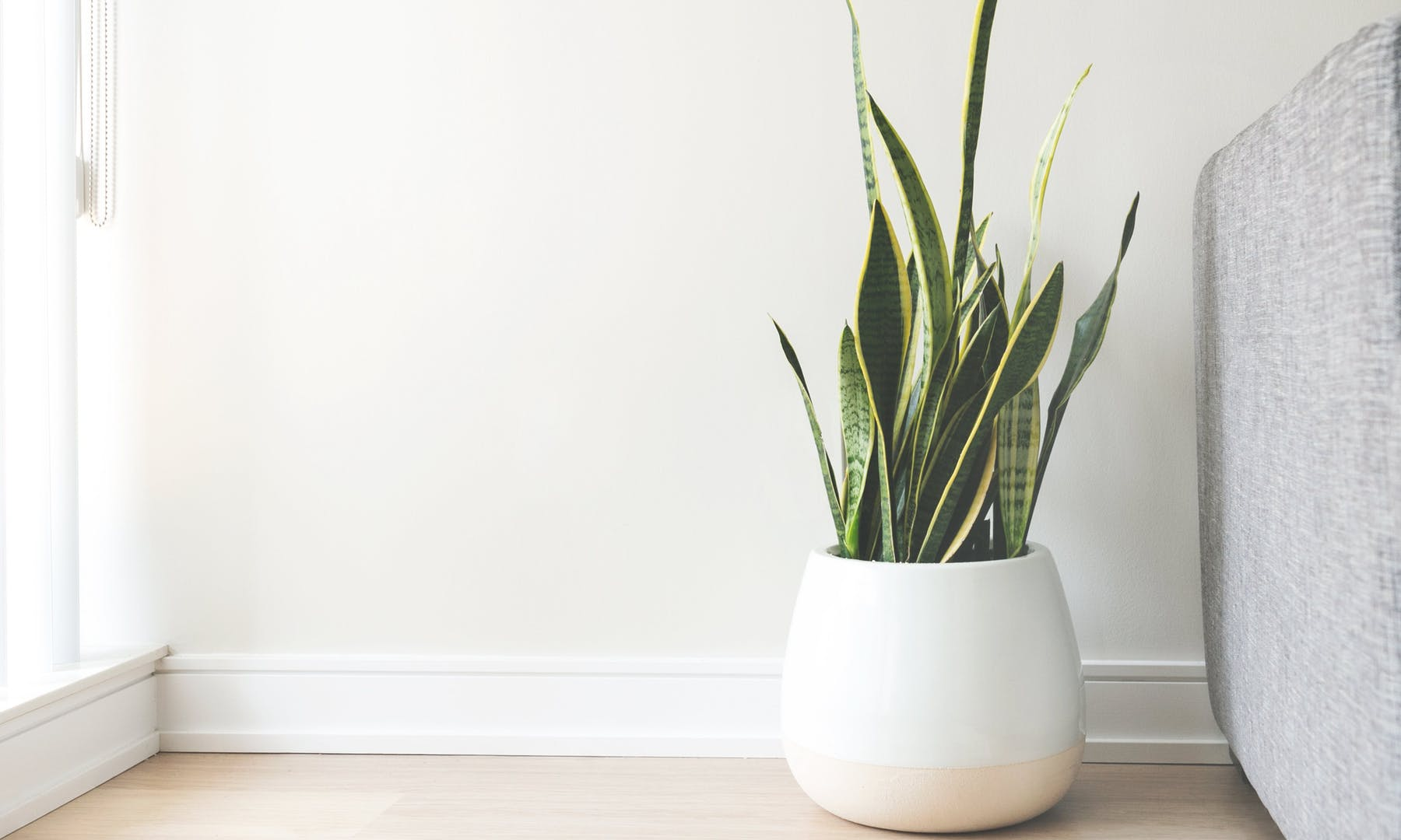 plants remove indoor air pollution