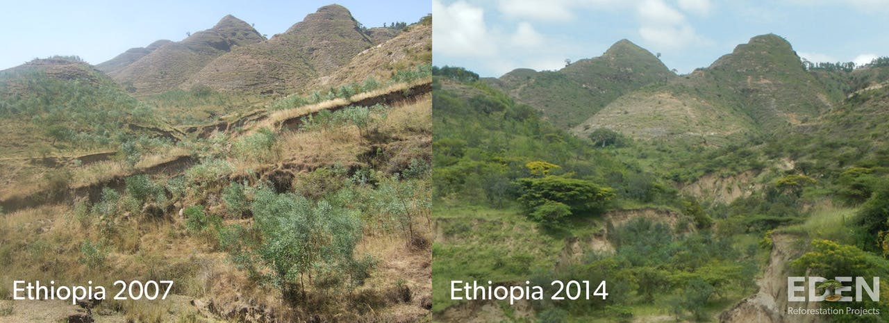 Eden Reforestation Projects before and after