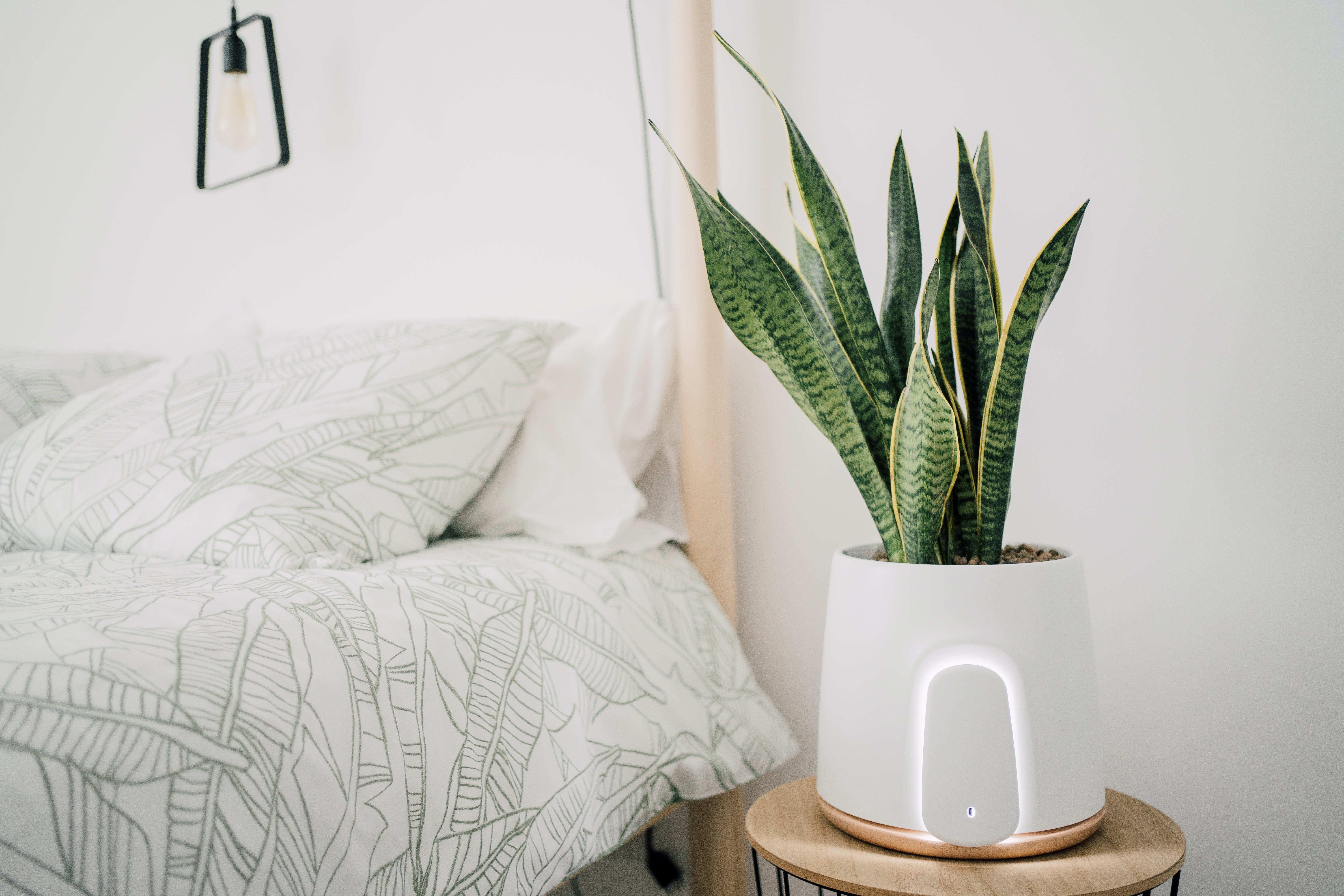 how to find the perfect air purifier