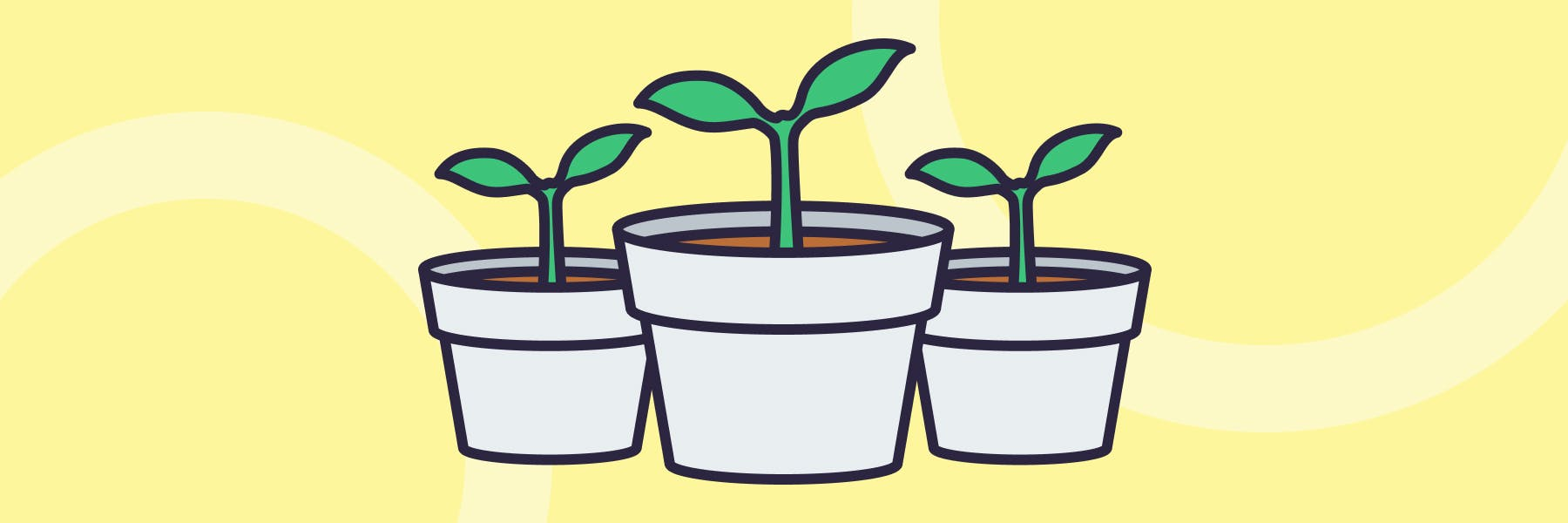 An illustration of three pots, each containing a strongly developing seedling