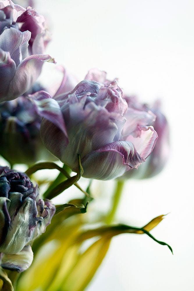 Der Tulpenstrauss