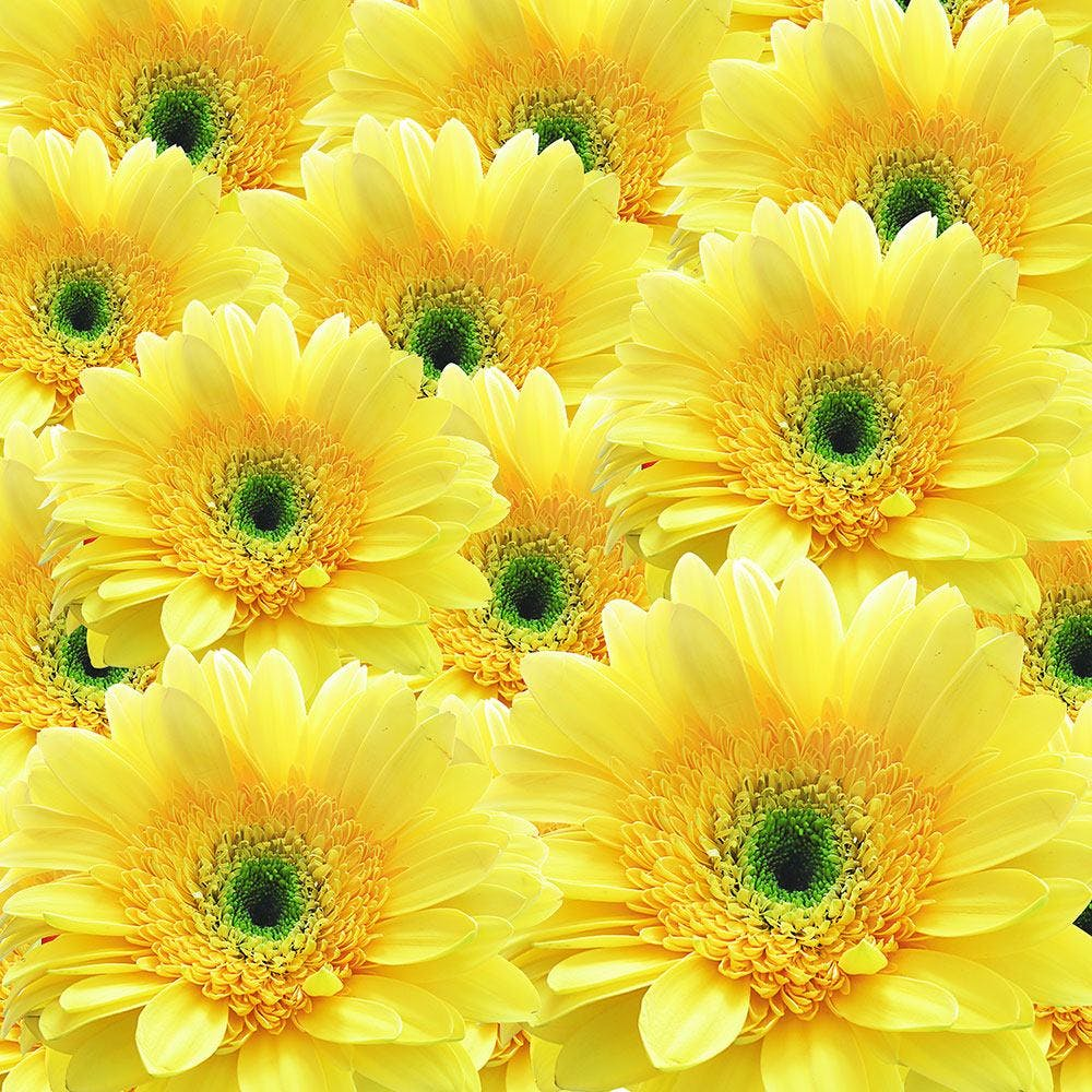 FOTOTAPETE FLOWER POWER BLUMEN