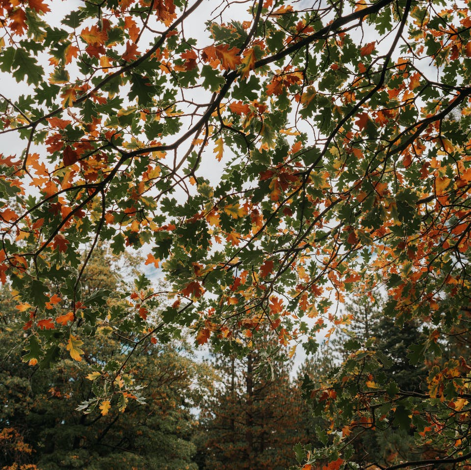 Fall colors on Grays Peak Trail in Big Bear Lakes Southern California