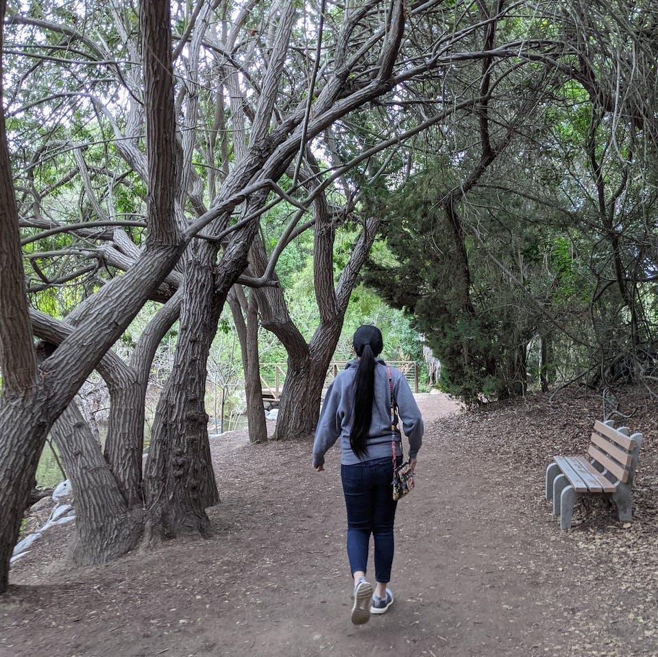 Woman walking under oaks and by a bench in El Dorado Regional Park east Long Beach Los Angeles County