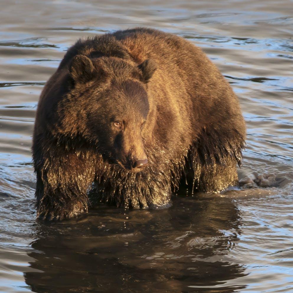 Bear near Anchorage Alaska