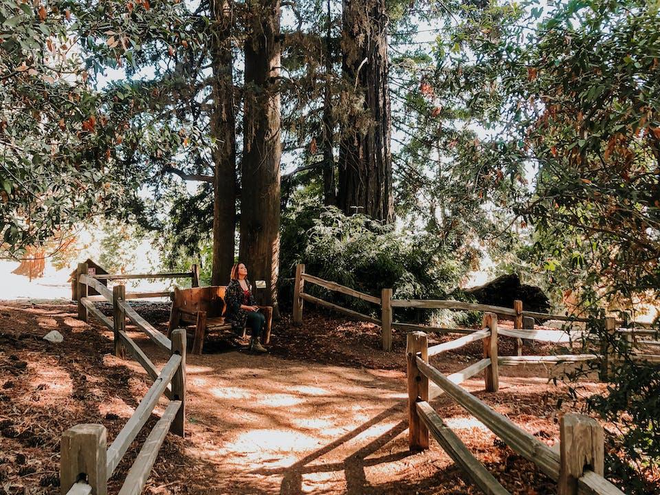 Hiker in a redwood grove at Oak Glen Preserve near Yucaipa in Oak Glen Southern California