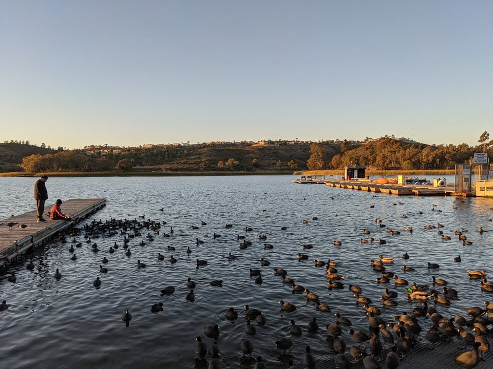 Two people on a dock overlooking Lake Miramar filled with Canada Geese