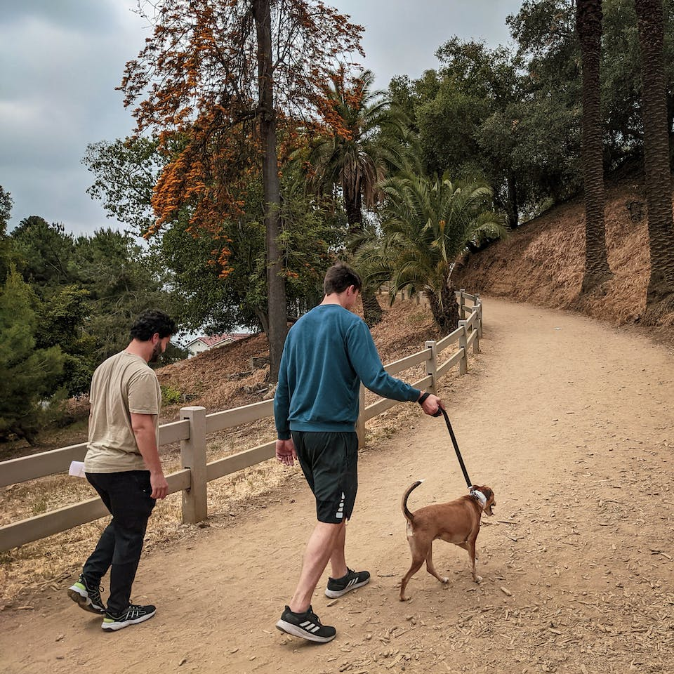 Two hikers and a dog going up a tree lined hill at Runyon Canyon in Los Angeles