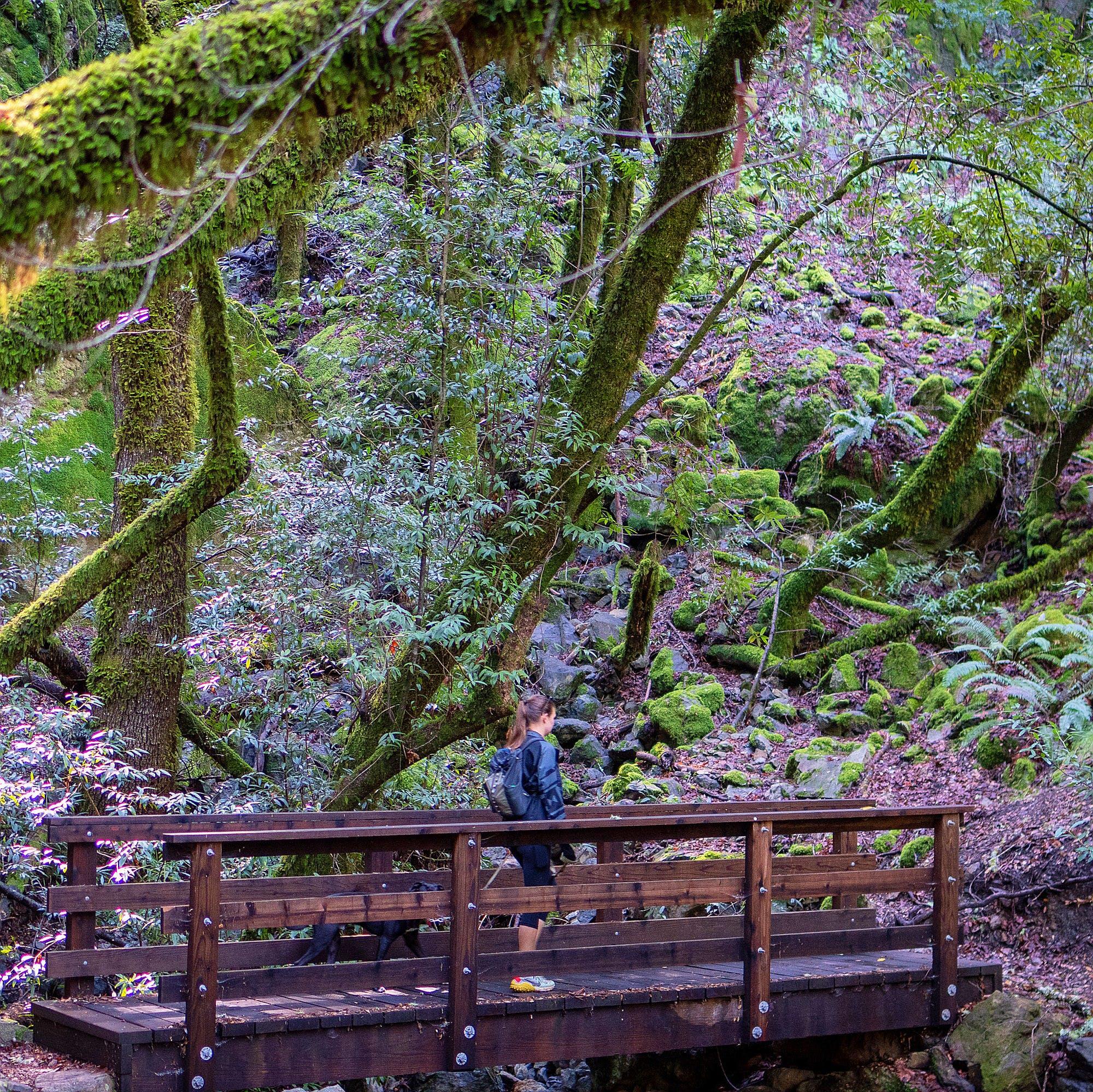 woman walking over bridge in woodland