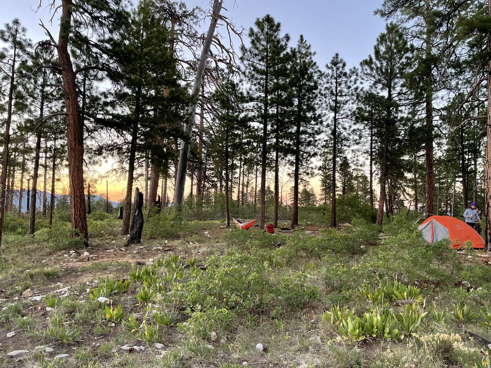 Primitive campsite with an orang tent among trees on West Rim of Zion National Park
