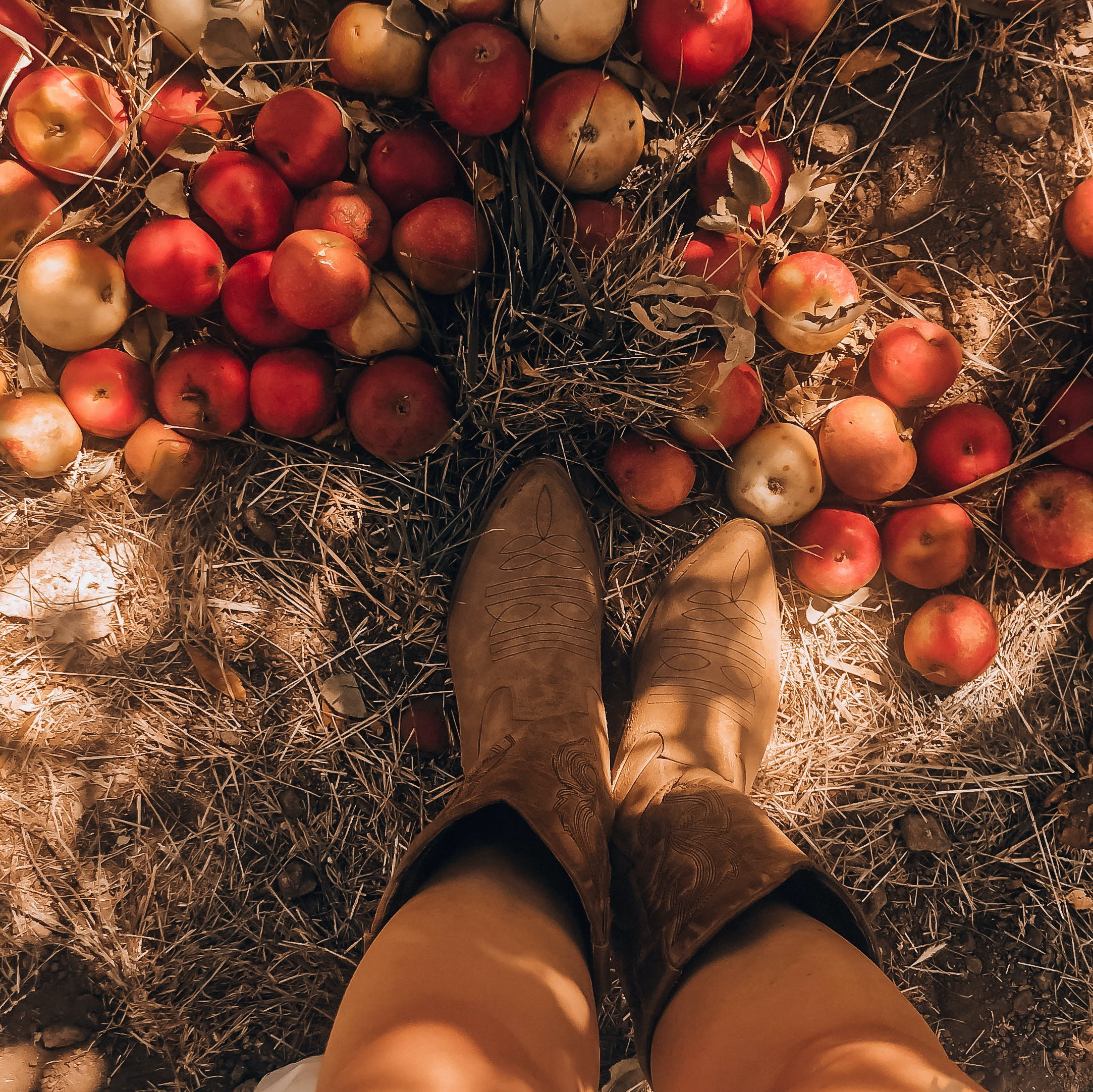HIkers' boots amid fallen apples on the ground at Oak Glen Preserve near Yucaipa