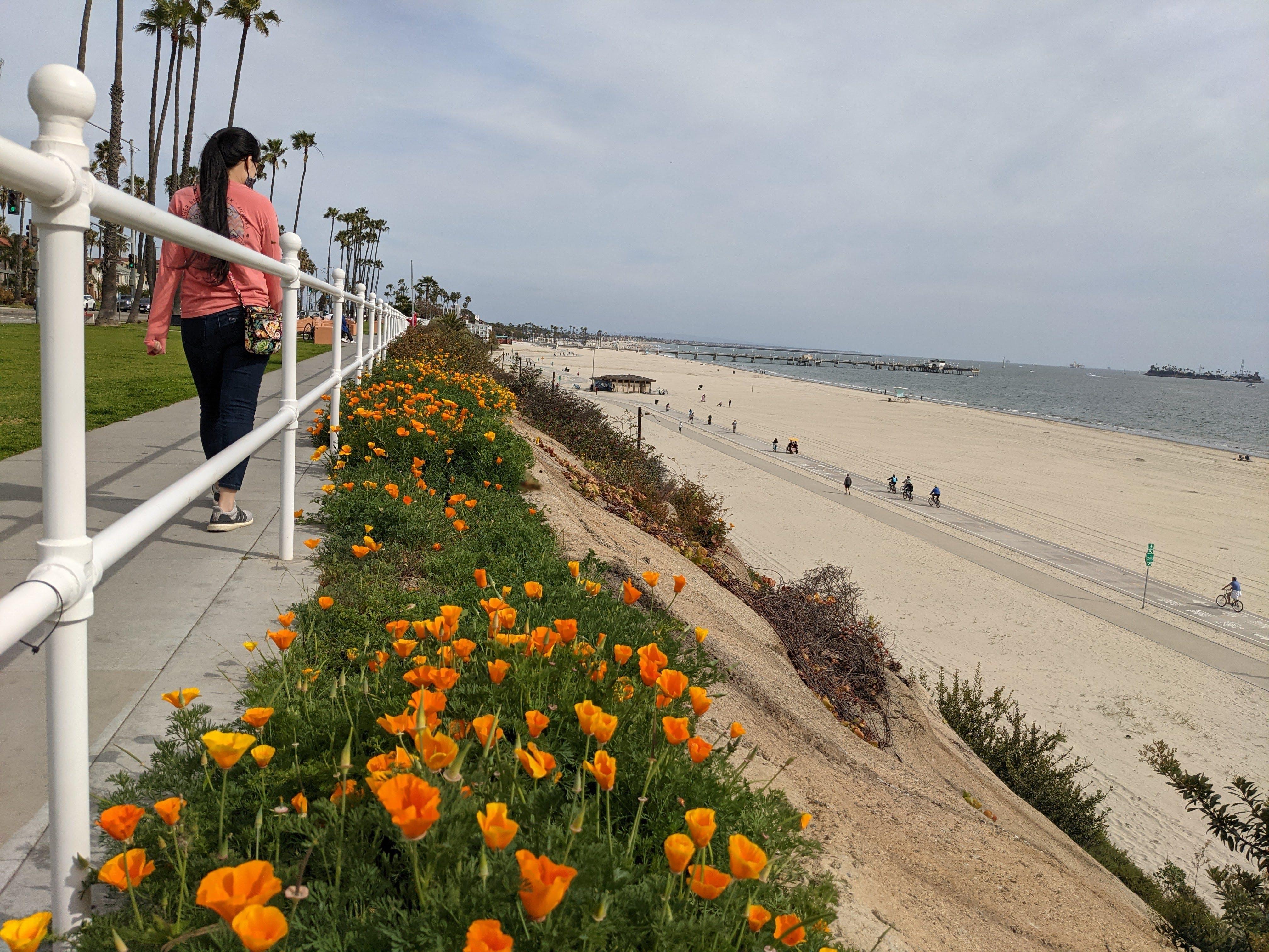 Woman walking alongside poppies at Long Beach in Los Angeles County