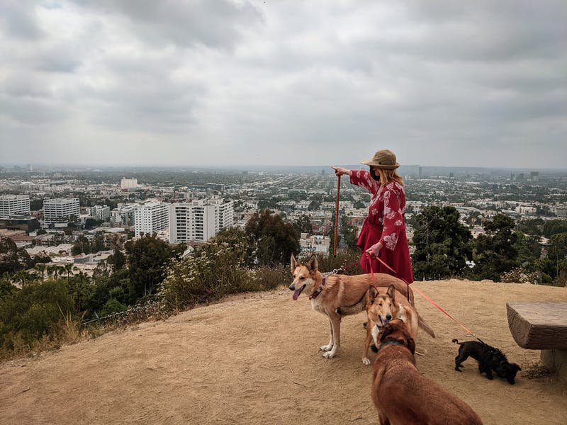 woman hiking to view over LA at Runyon Canyon with dogs