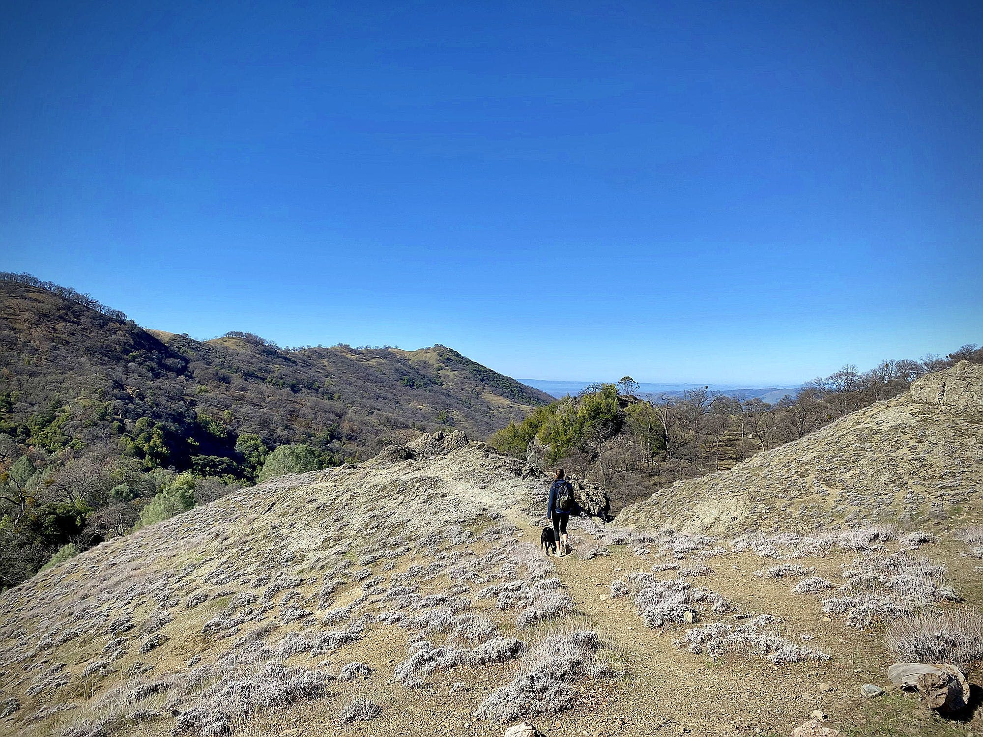Woman hiking in the Ohlone Wilderness in the East Bay