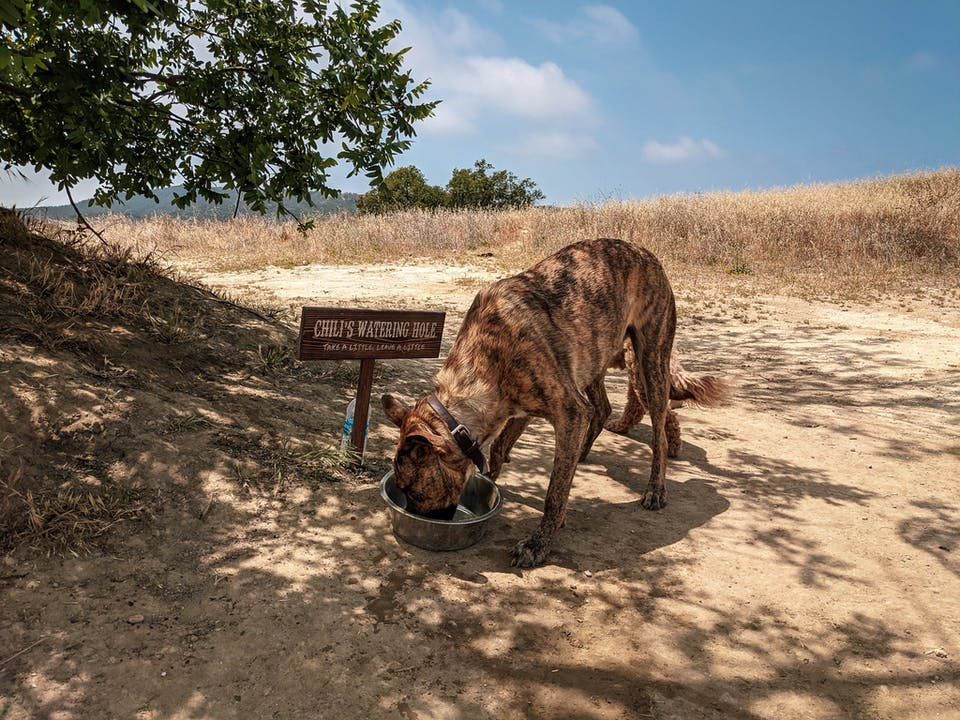 Dog drinking out of a waterbowl at a dog station at Upper and Lower Canyonback Trails in Los Angeles County