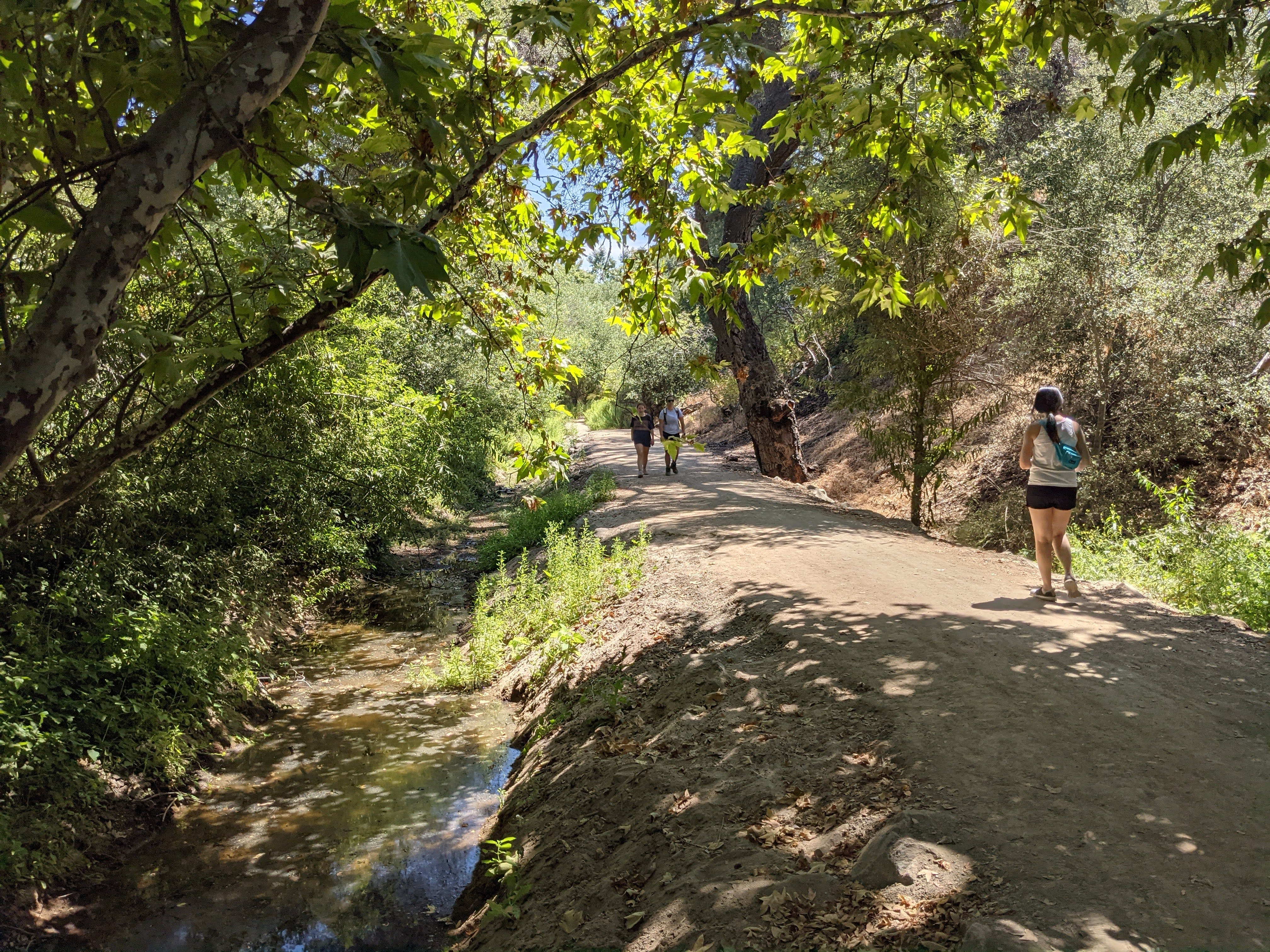Woman walking under a canopy of trees next to a stream on a hiking trail in Whiting Ranch Wilderness Park in Orange County
