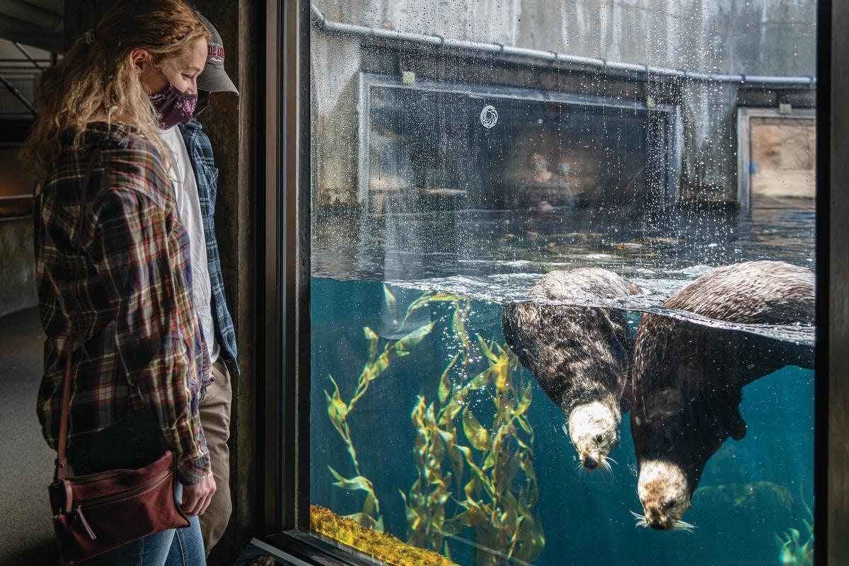 sea otters exhibit at Monterey Bay Aquarium