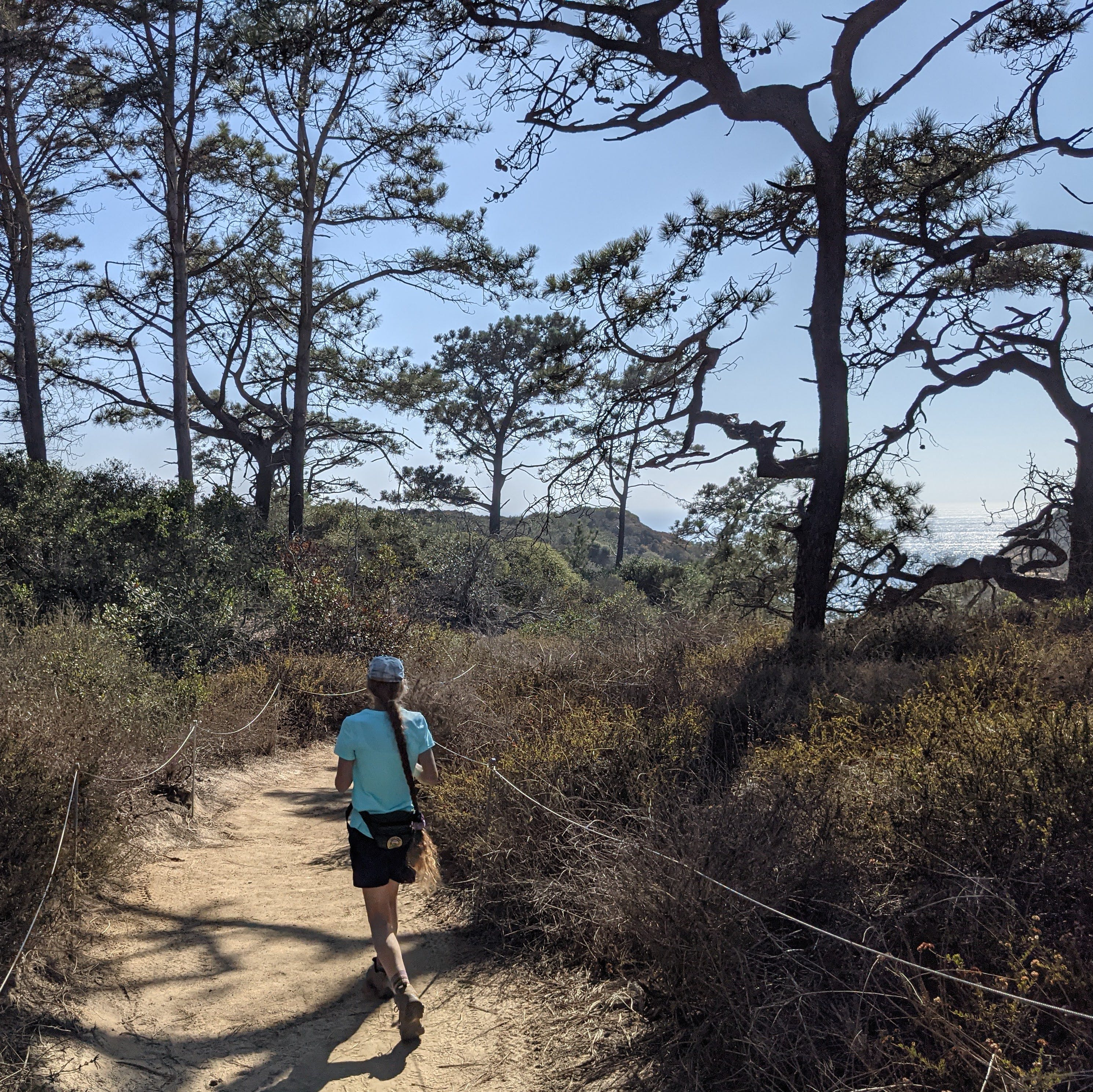 Hiker walking among Torrey pines at Torrey Pines State Natural Reserve in San Diego County