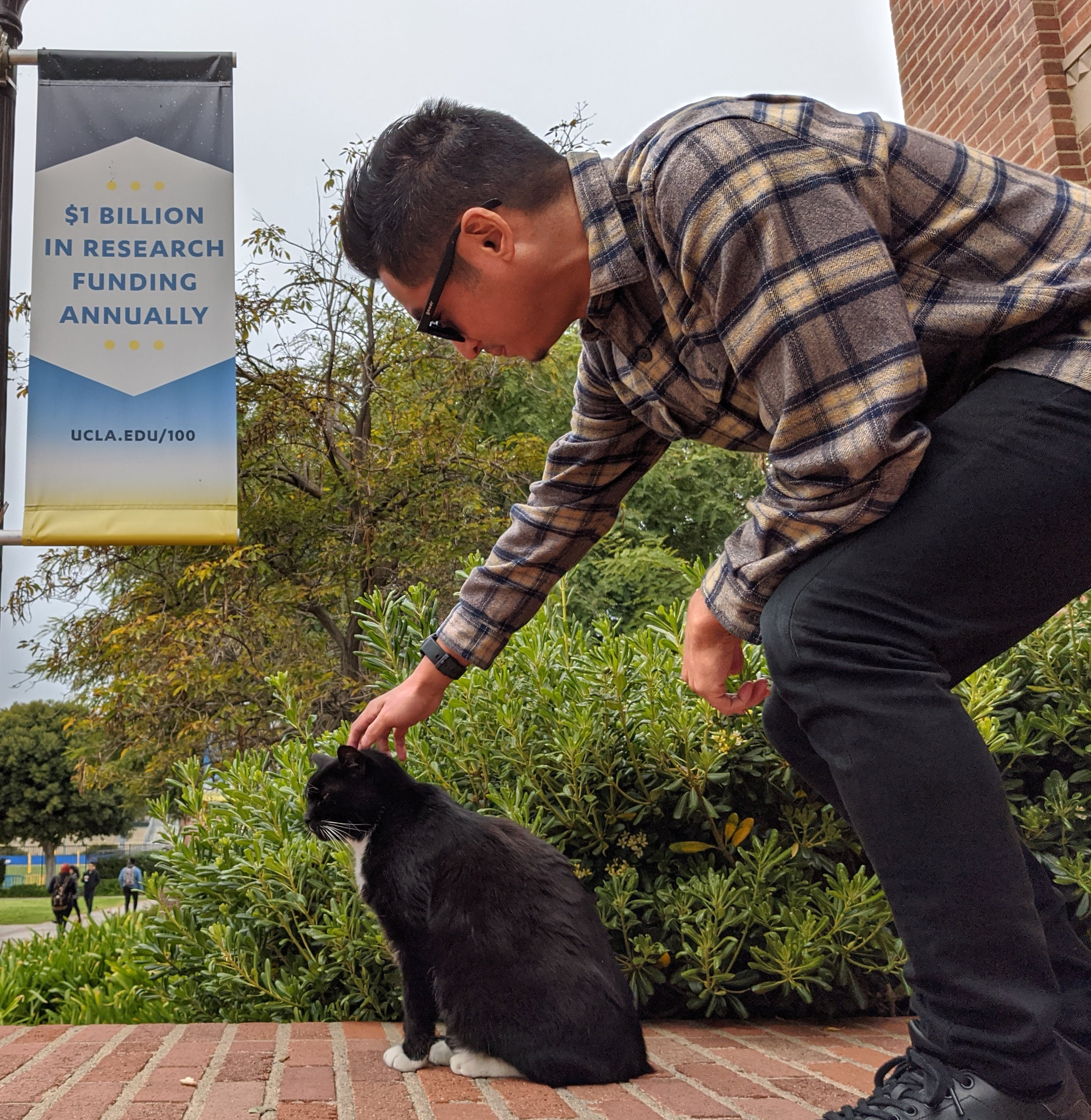 Person petting Powell Cat at UCLA campus