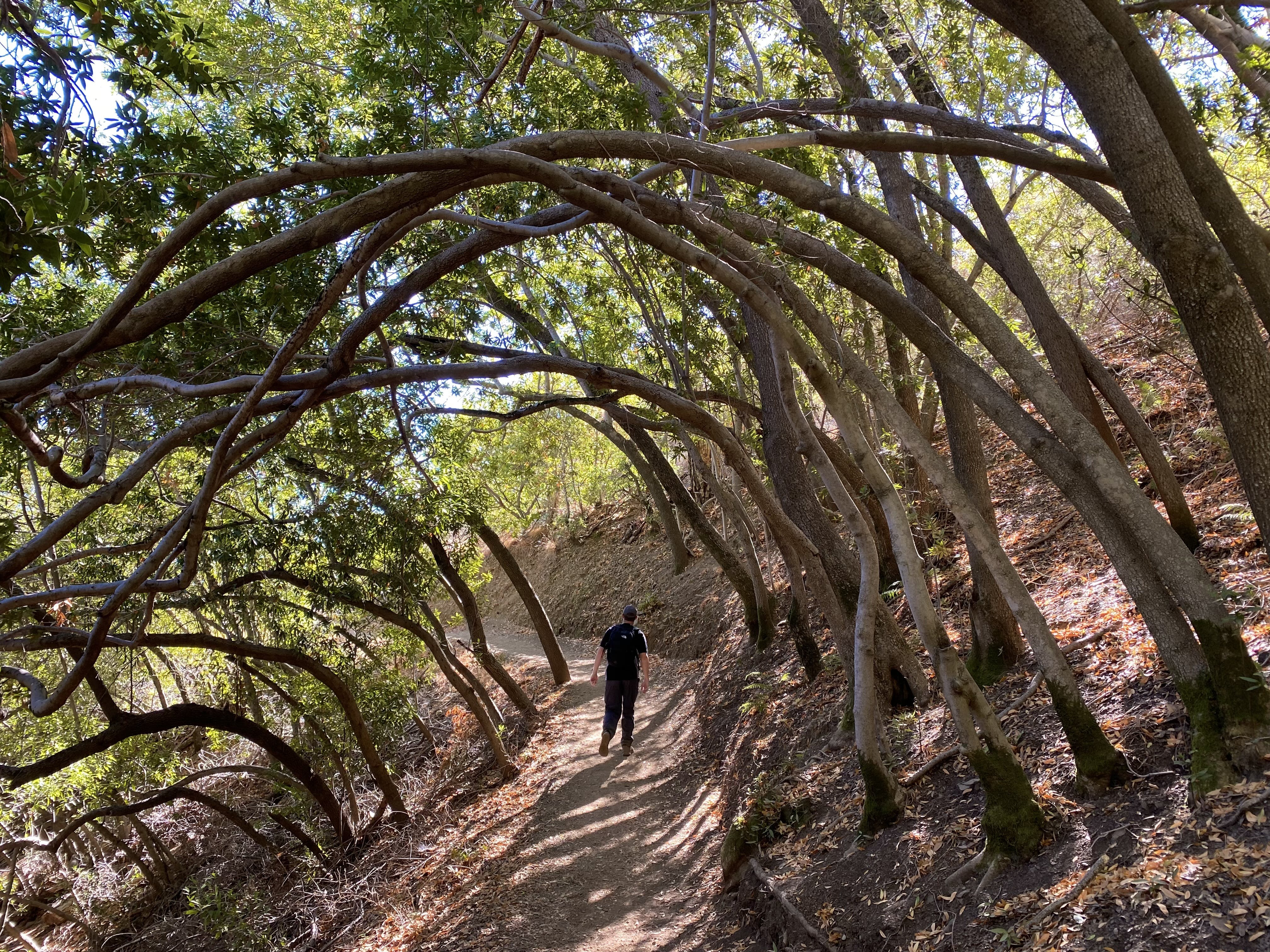 Hiker under a canopy of trees on the trail up to the summit of Mount Umunhum