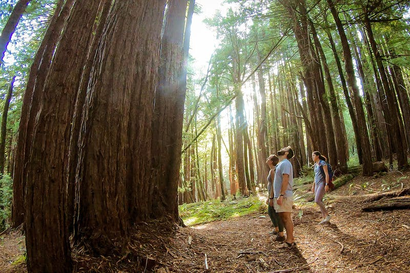 Hike Pomo Canyon for Redwoods on the Sonoma Coast