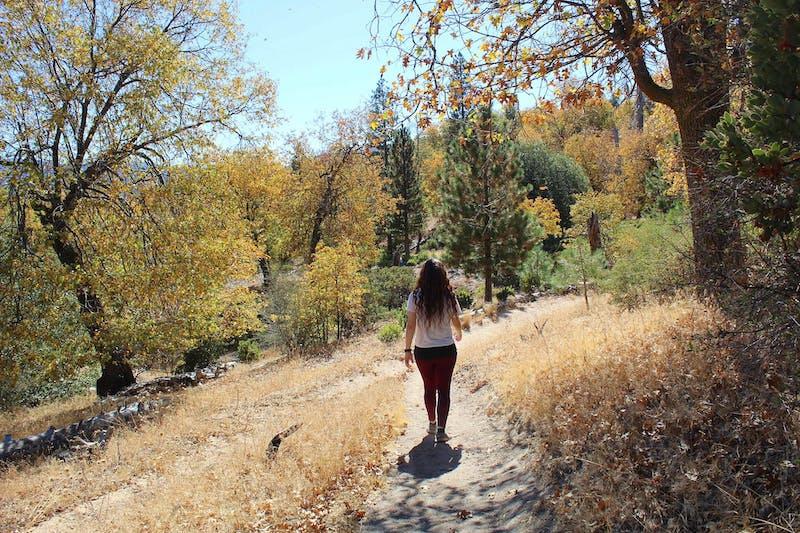 Fall Color Hike Sawmill Road Near Lake Arrowhead