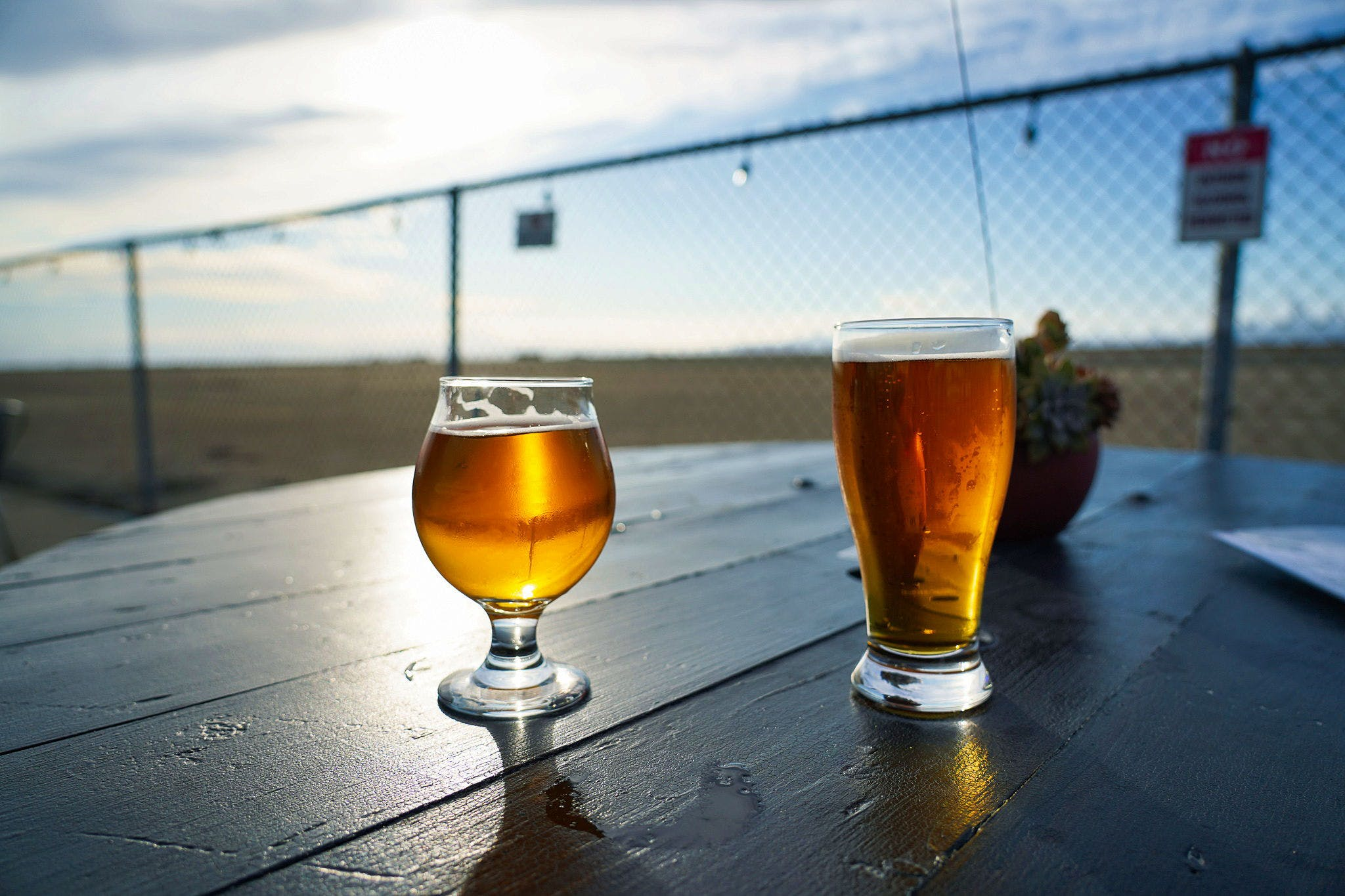 Two beers on a table at Faction Brewing in Alameda