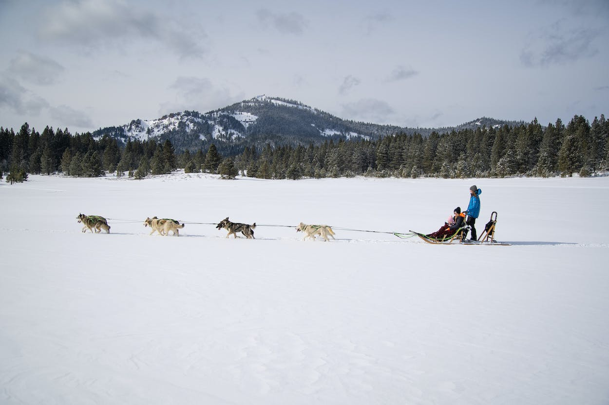 Dog sledding Reno Tahoe winter