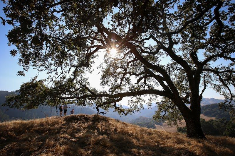 Grandmother Tree Hike Hood Mountain Sugarloaf park Sonoma