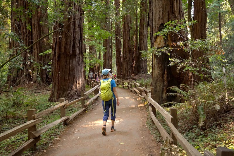 Meditative Redwoods Hikes Forest Bathing in the SF Bay Area