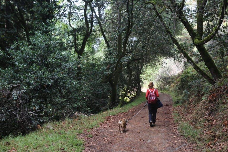 Hike Joaquin Miller Park in Oakland