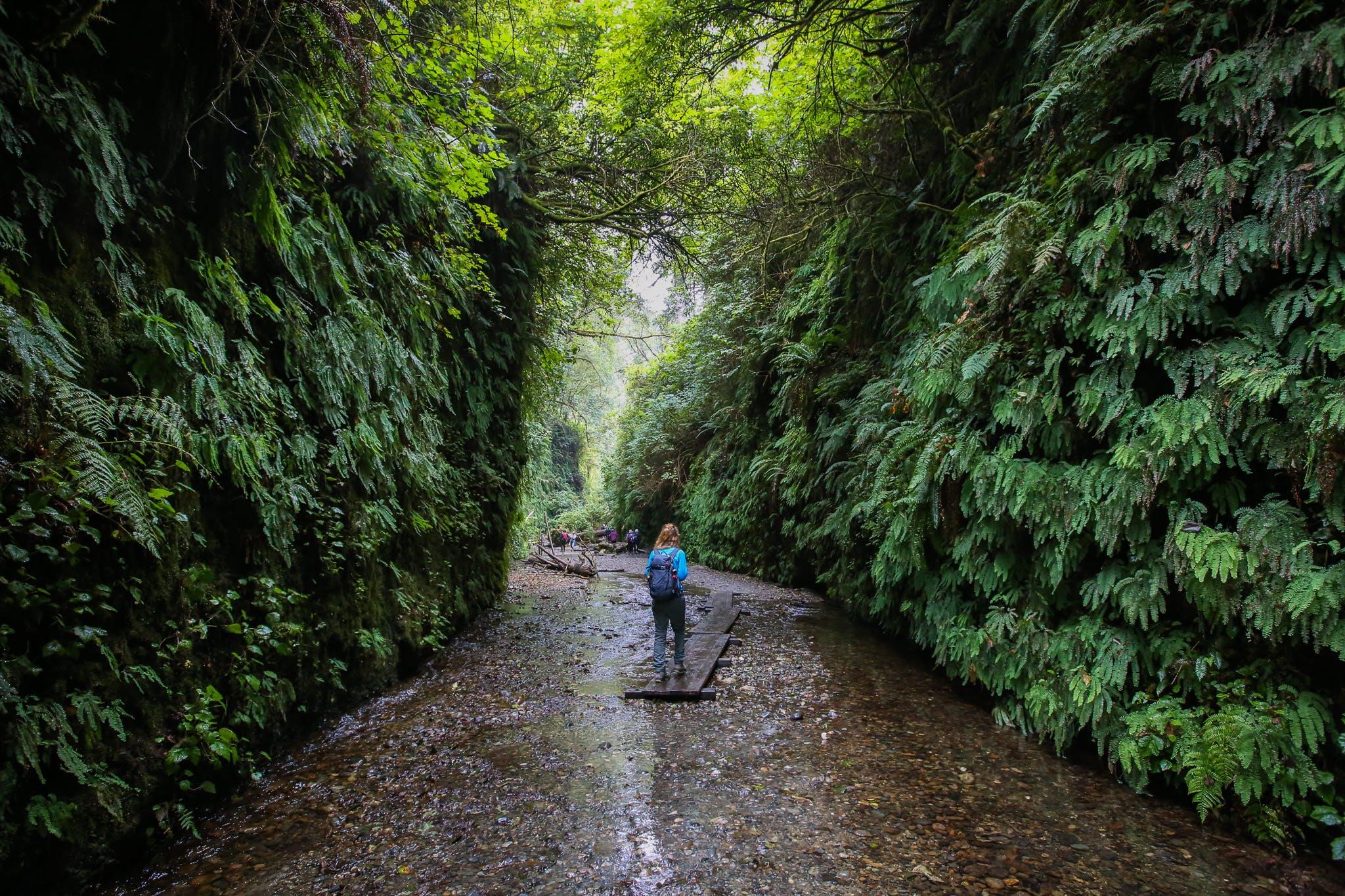 Hike Fern Canyon Prairie Creek Redwoods