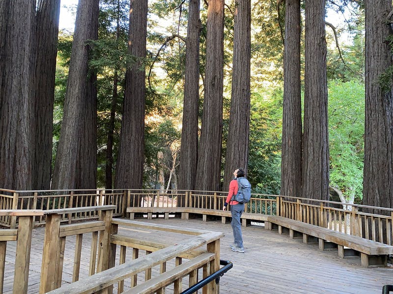 Hiking and forest bathing under redwoods at Sanborn County Park