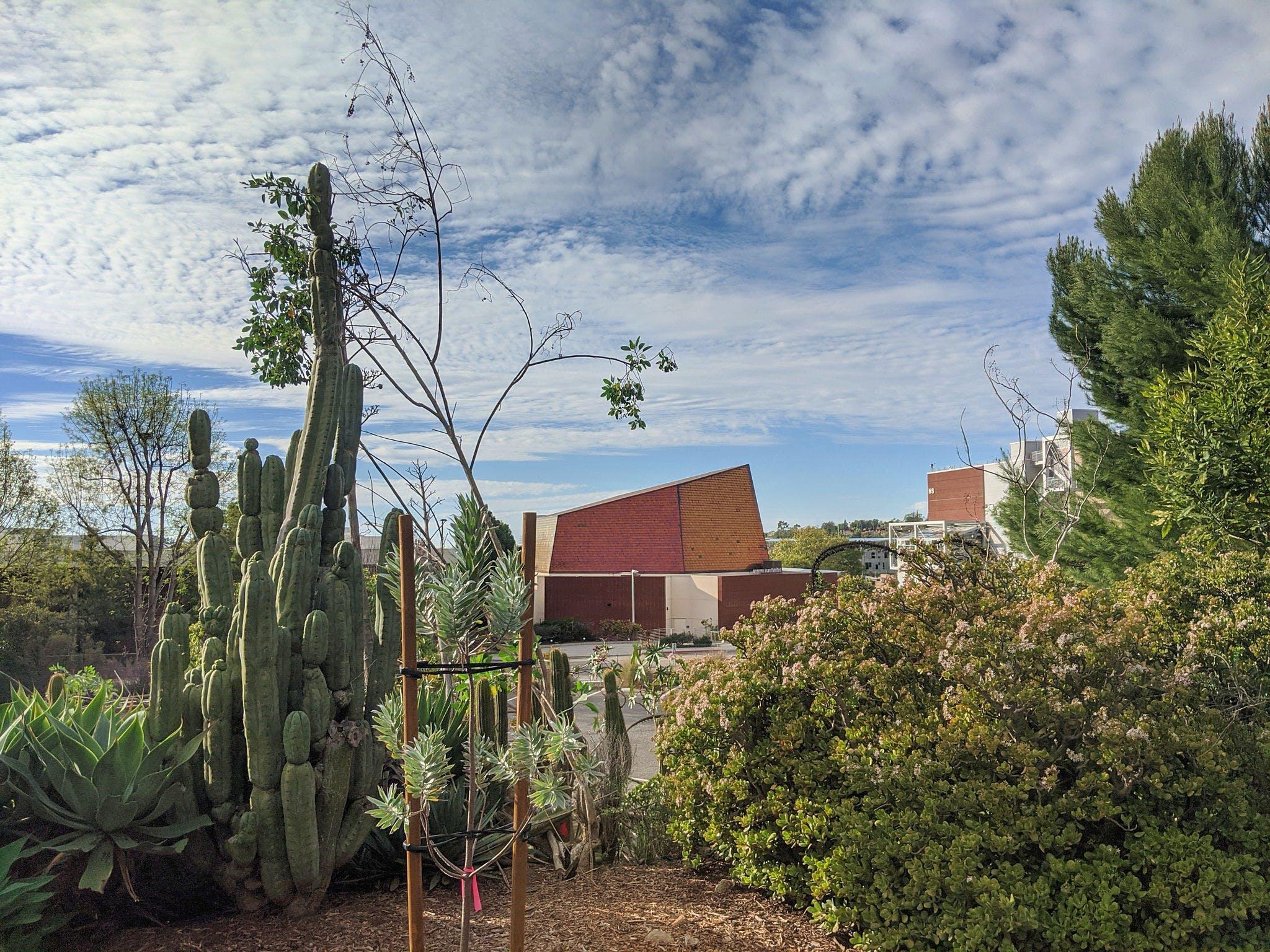 Hike Palomar College Arboretum