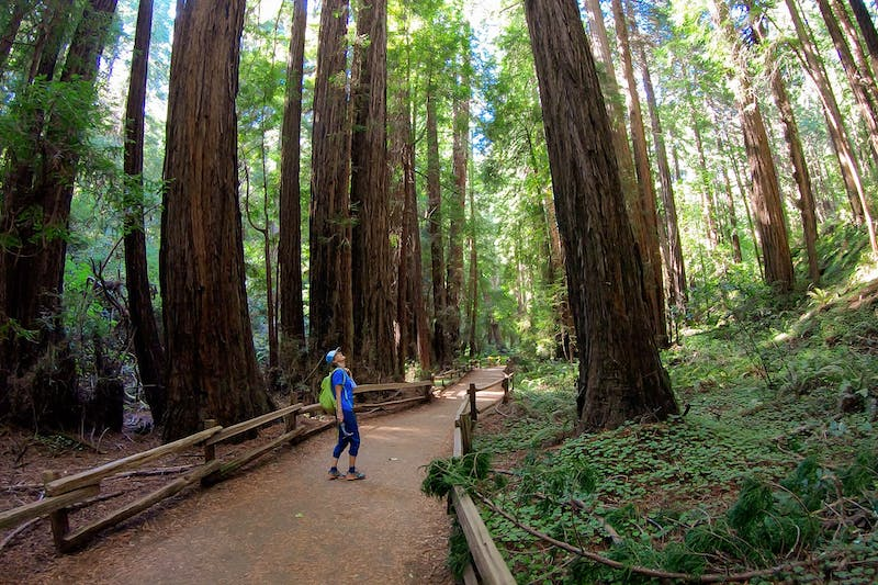 Hike Mount Tamalpais into Muir Woods