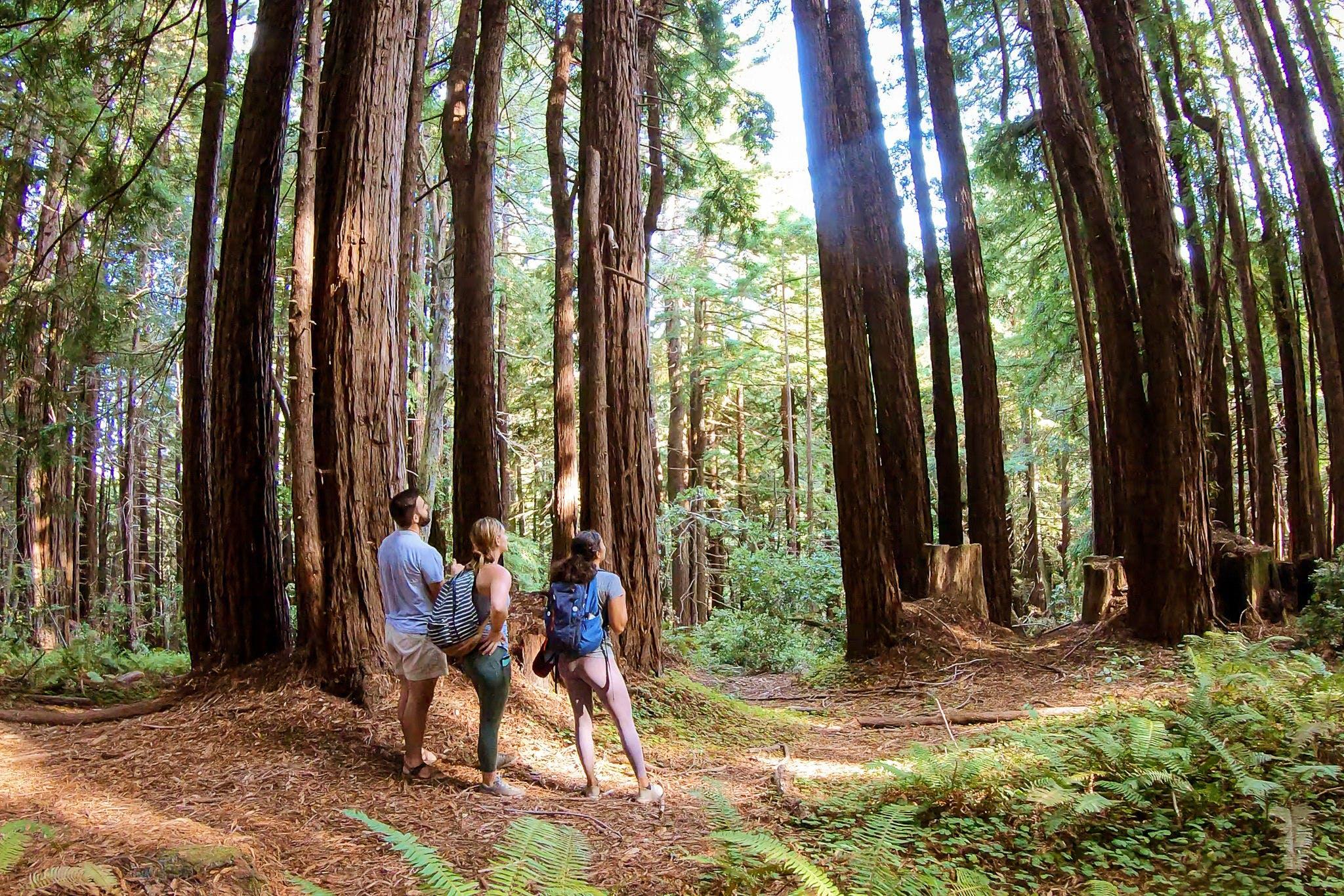 Hike among the redwoods at Pomo Canyon on the Sonoma Coast