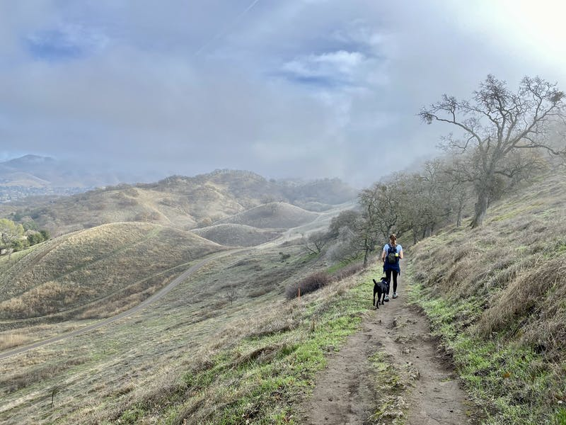 Woman hiking the trail at Shell Ridge Open Space near Walnut Creek in the East Bay