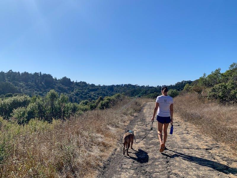 Berkeley hike Tilden Wildcat Gorge Trail