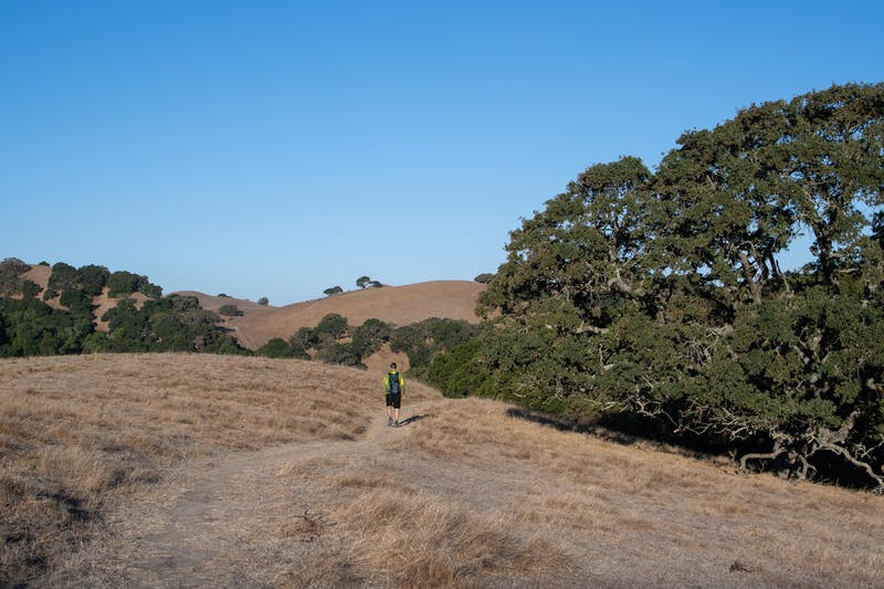Hiker at Fernandez Ranch in the East Bay
