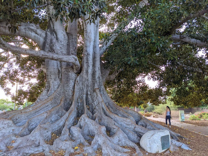 Explore Big Tree Park in Glendora LA County