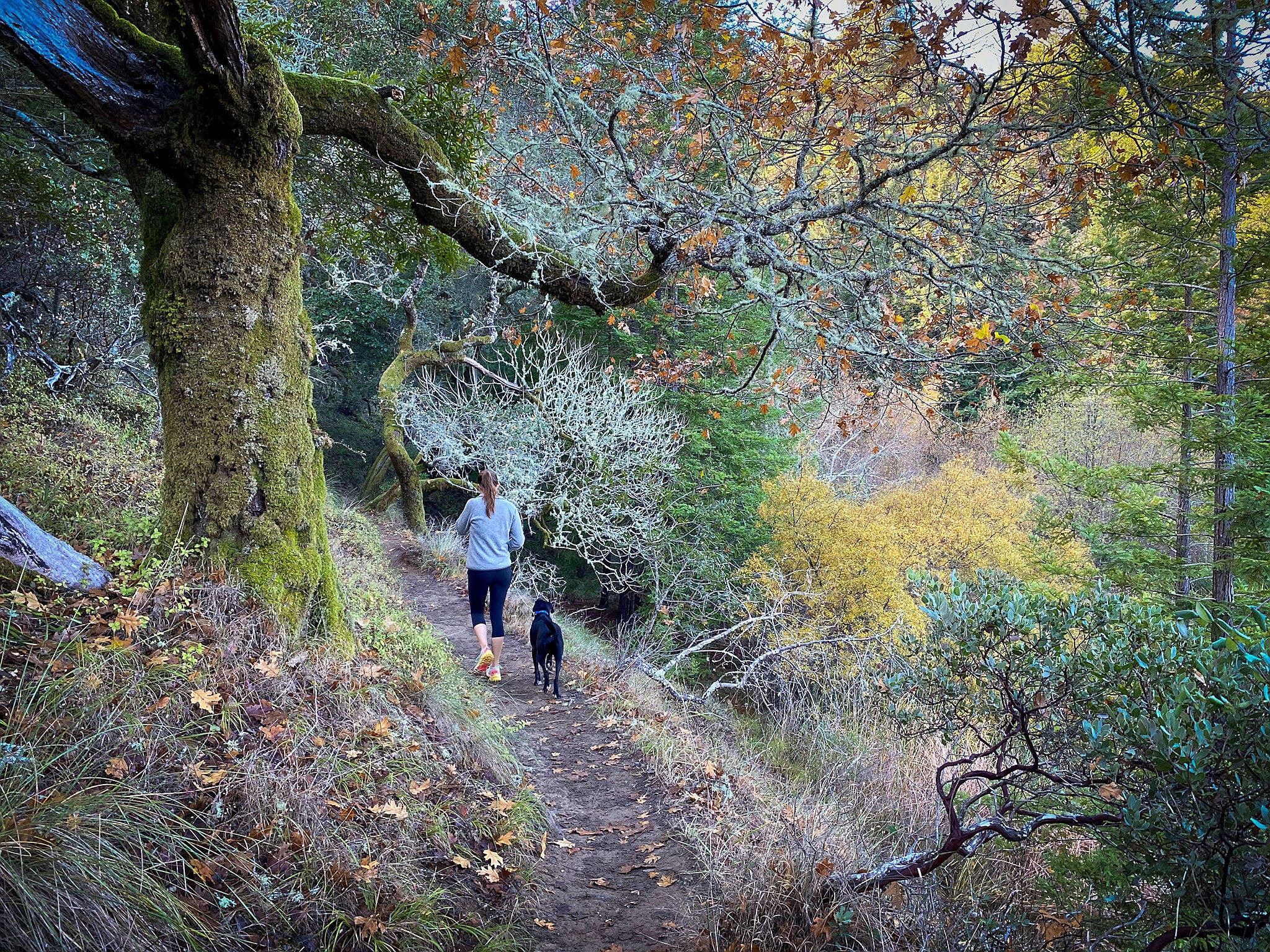 Woman and dog hiking through a forest in Mount Tam