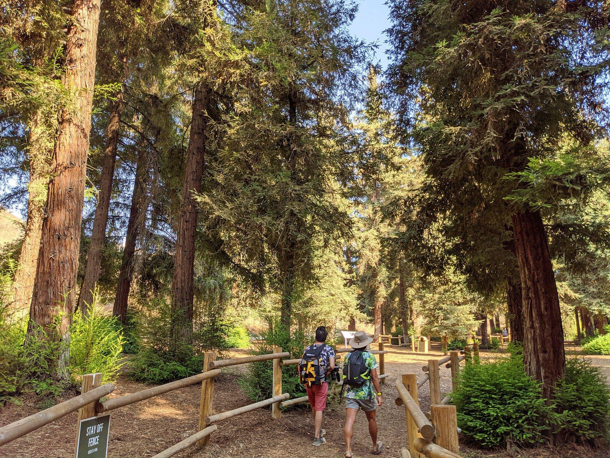Hike Carbon Canyon Regional Park Coastal Redwood Grove