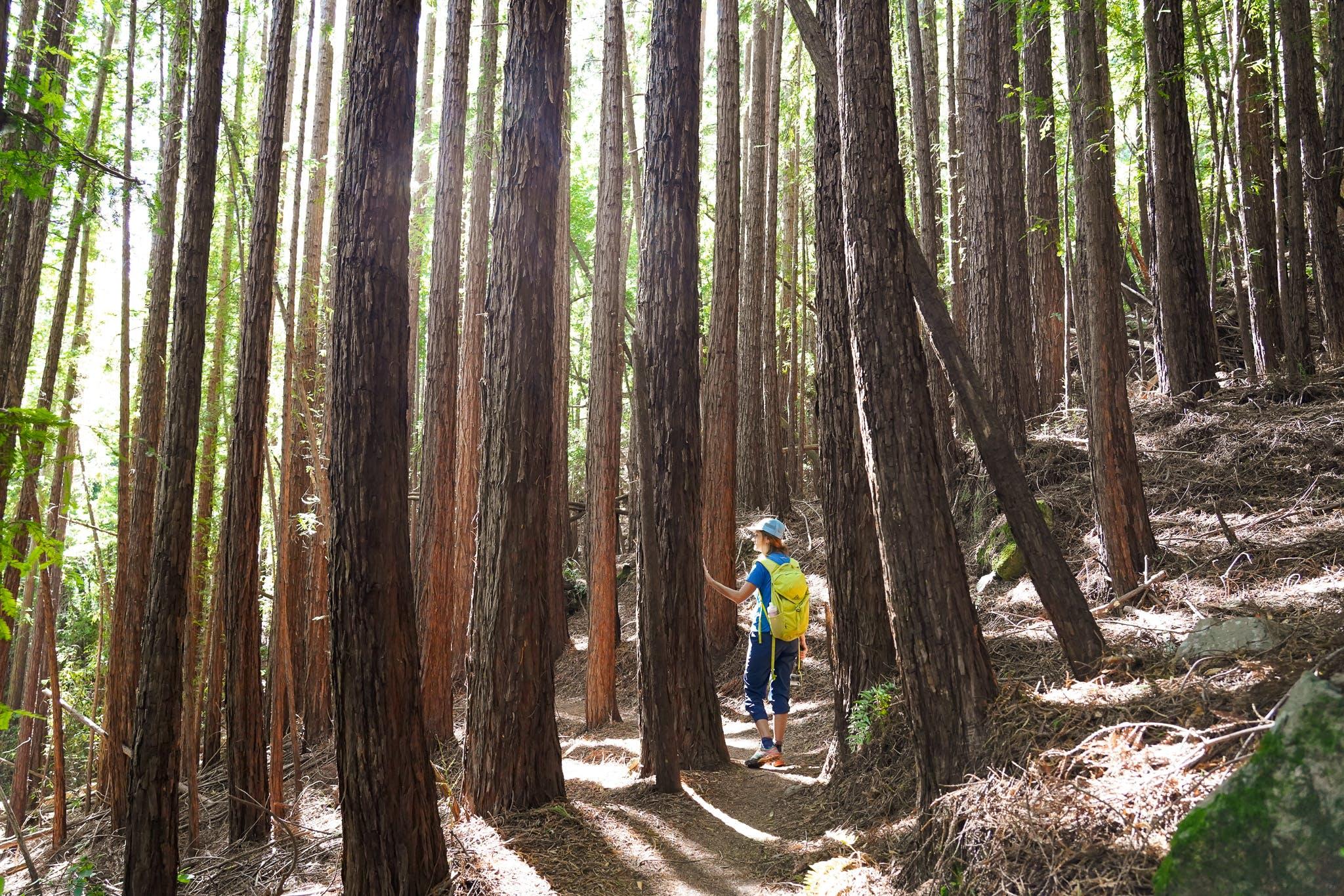 Muir Woods secret hike Mount Tamalpais Bootjack trail