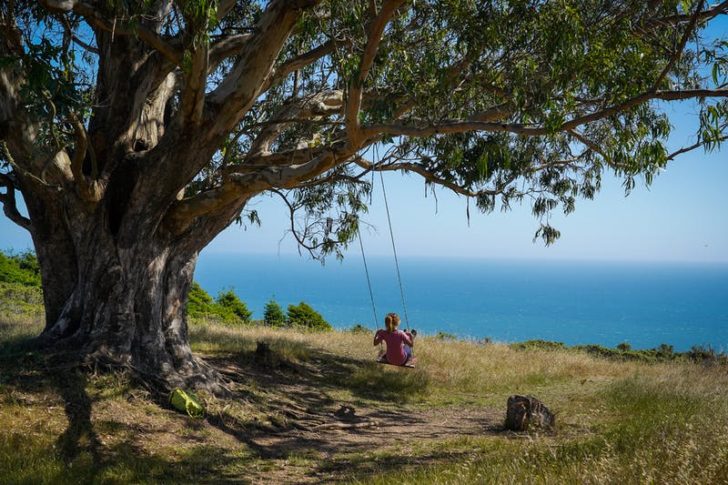 Woman on a Tree Swing overlooking the Pacific at Mount Tam in Marin County