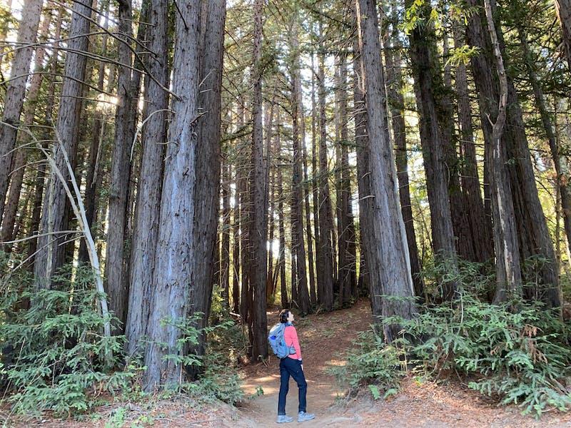 Hike among redwoods at Wunderlich Park