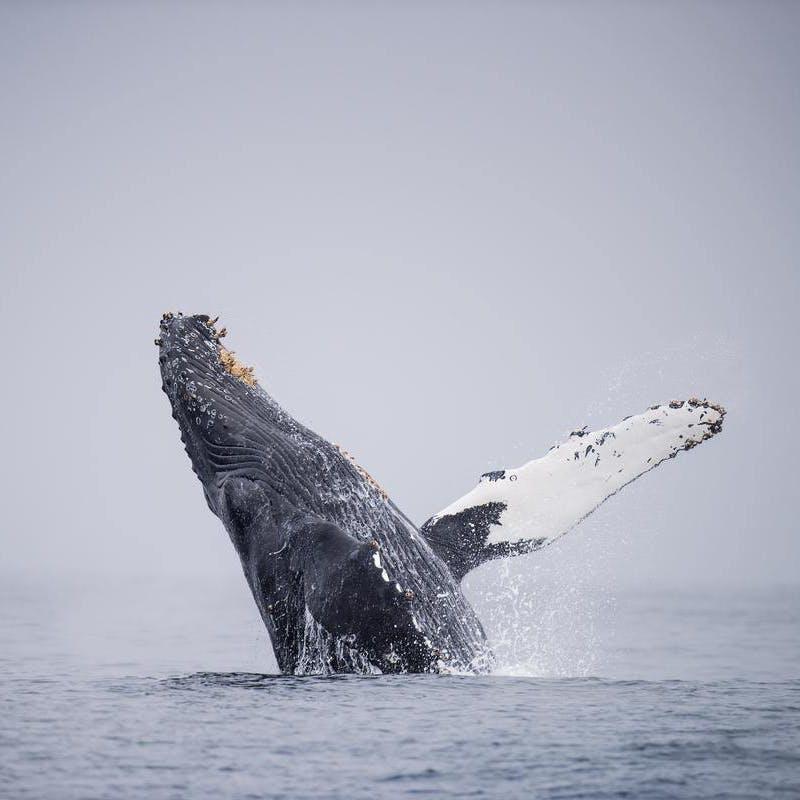 whale watch Monterey