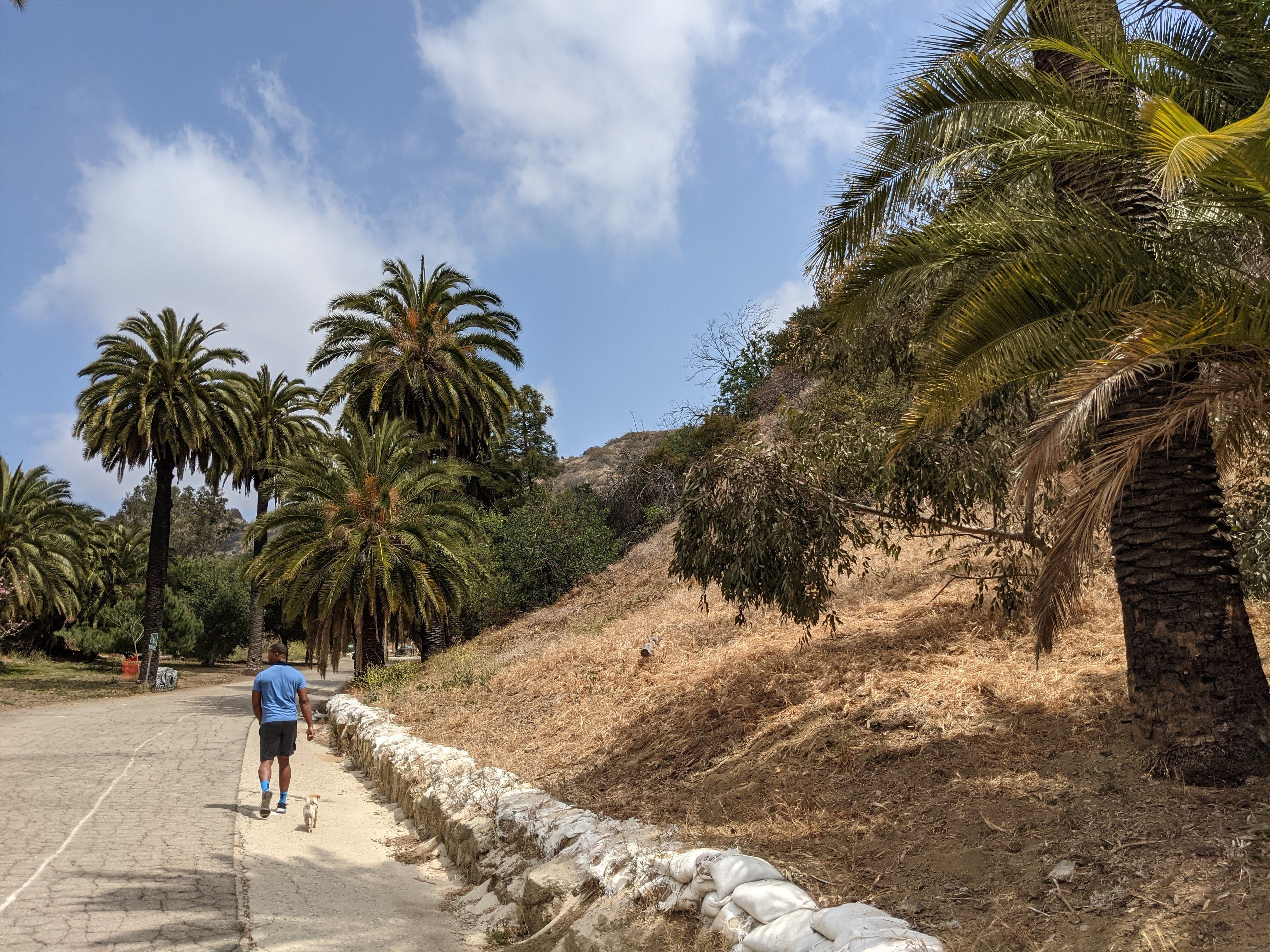 Man and his dog walking along a flat pathway with palm trees at Runyon Canyon in Los Angeles