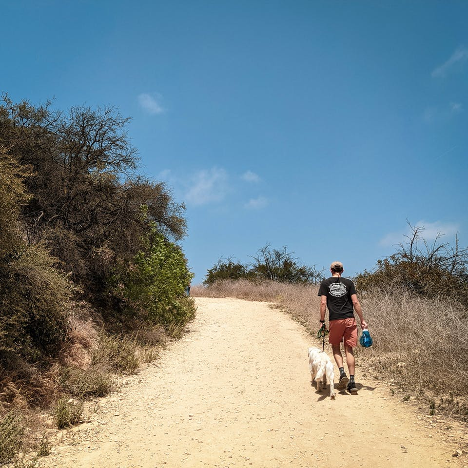 Hiker and a dog at Upper and Lower Canyonback Trails in the Santa Monica Mountains